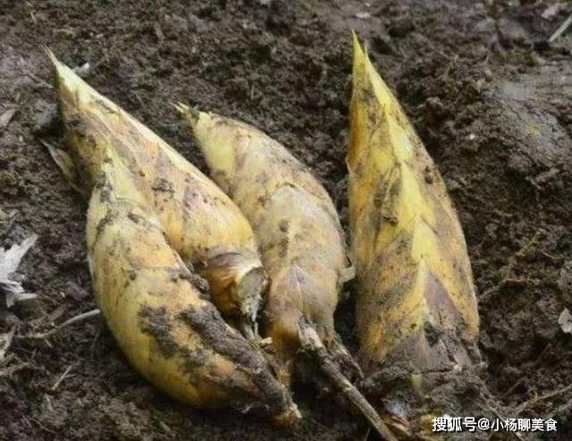 同样都是笋,春笋和冬笋有什么区别?哪个味道更好吃一点?