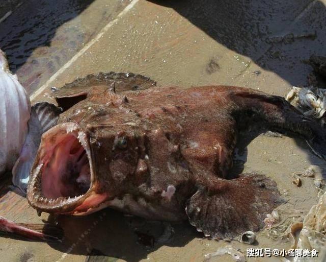 碰到这5种野生海鱼,不管多贵我都买,因为还没