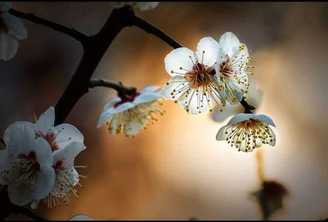 优美诗词精选5首|春风得意时节好,吹去冬寒满路喧