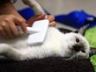 拿起小本本做笔记,新手铲屎官养猫,到底该选长毛还是短毛