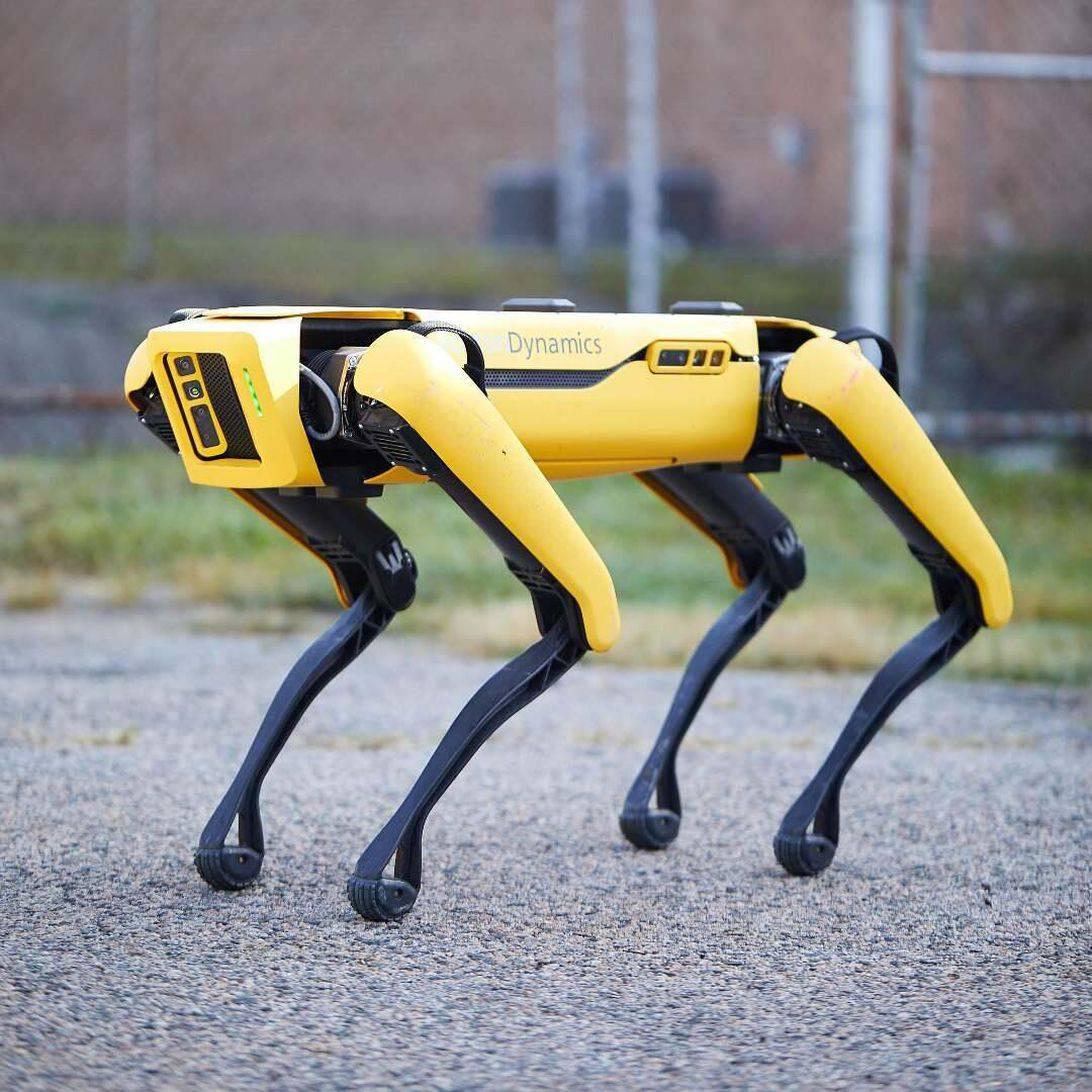 能翻山越岭还能放牧 波士顿机器狗又添新技能