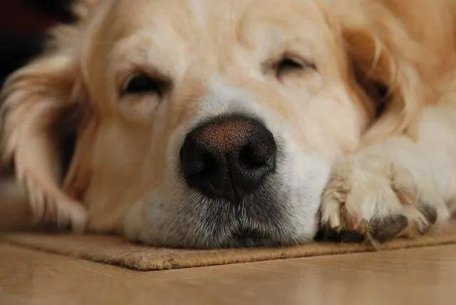 狗狗出现这5个征兆,说明肚子里的虫已经 很多 了