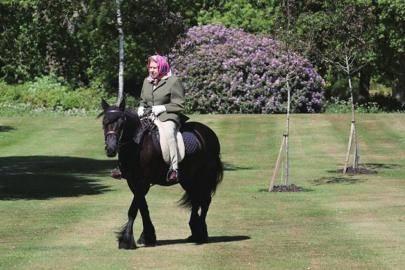 """『隐身』""""隐身""""数月之后英国女王骑马""""现身"""","""