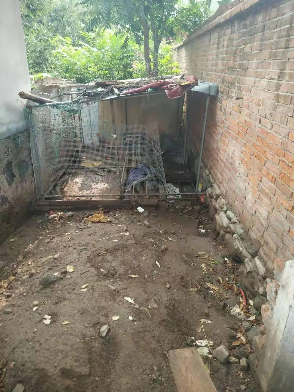农村厕所改造后照片