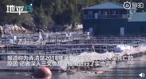 挪威三文鱼养殖链被曝光 许多带病鱼身上布满溃疡