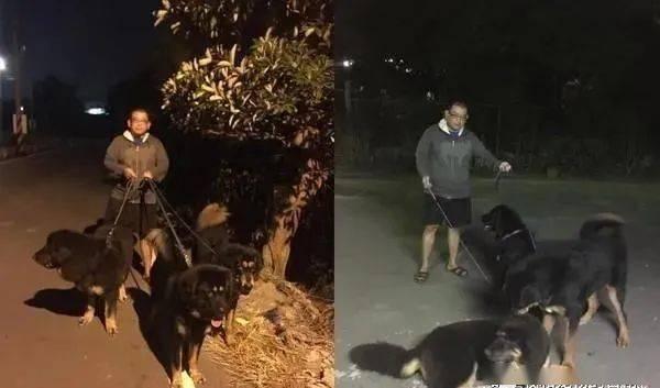 饲主牵着3只霸气獒犬在巡村,网友:简直是地狱三头犬!