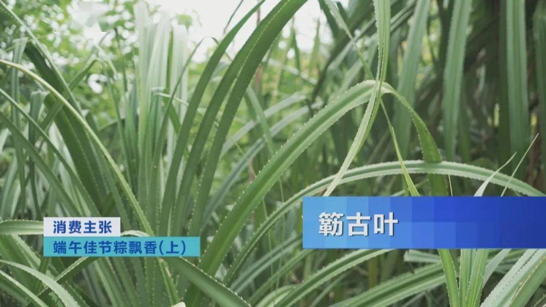 端午佳节粽飘香!来湖南、广东,品粽子,感受端午民俗! 增肌食谱 第23张