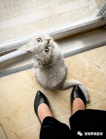 超萌小猫呆站镜前用毛绒肉掌狂摸头顶:讲述!发现可疑耳朵!