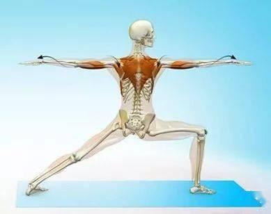 练瑜伽,一定要学会激活启动肩胛骨!_运动 高级健身 第5张