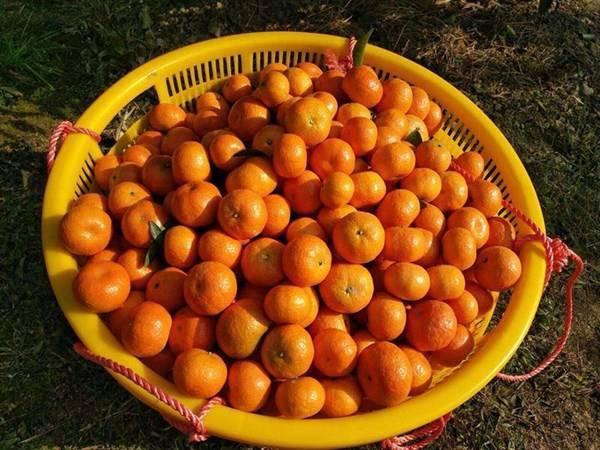 「西瓜」橘子皮跟西瓜皮有这么大的用处,你的都扔了吗?赶紧来看看吧!