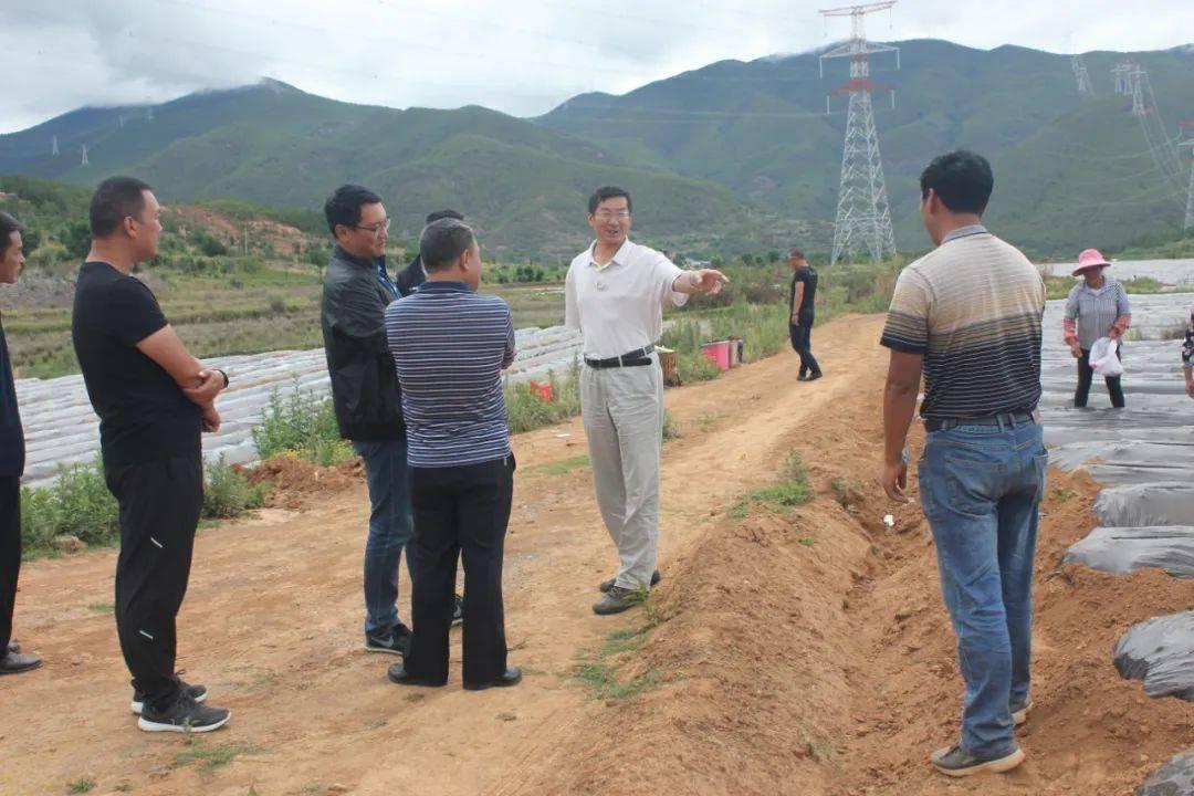   王兆炜到剑川调研农业工业生长事情