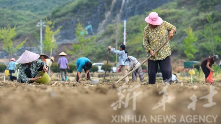 湖南道县:特色种植助农增收