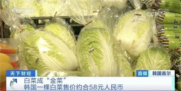 白菜价格暴涨,58元一棵!韩国泡菜都严重紧缺了,怎么回事?
