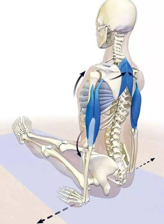 练瑜伽,如何激活肩胛骨,启动菱形肌?