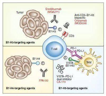 新一代的免疫检查点抑制剂:突破还是延续?