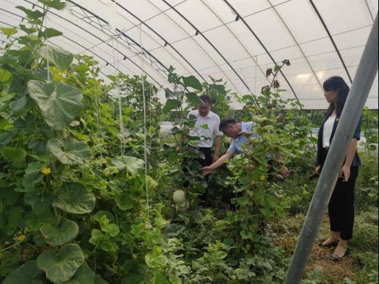 平舆县射桥镇严把农产品质量安全关打造绿色农产品生产基地