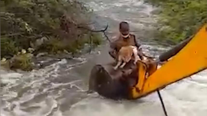 暴雨过后一只流浪狗被卡在灌木丛中印度警方出动铲车救援