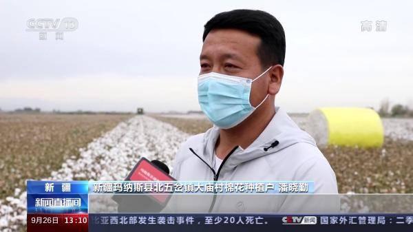 2.5吨棉花从收罗到包装需要多久?来新疆丰收季相识一下