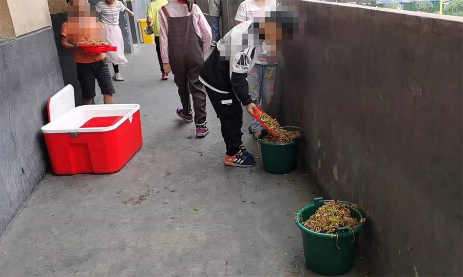 """阜阳一小学学生将营养餐倒掉""""溢出垃圾桶"""",校方:众口难调"""