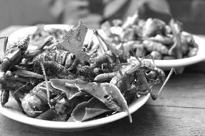 昆虫上餐桌需投入也需时间
