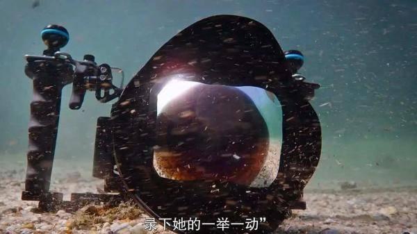 我的章鱼老师-4