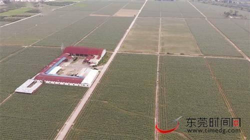 扶贫干部邓助严: 建成蔬菜基地 带领村民脱贫增收