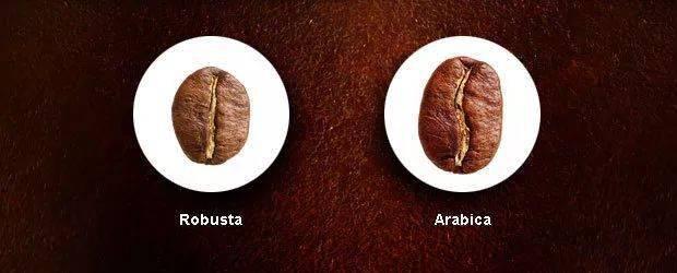 为何阿拉比卡咖啡更受欢迎? 十大品牌 第1张
