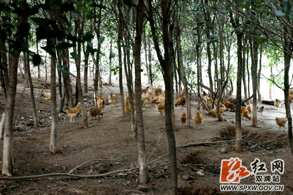 双牌:禁养野生动物 退养户成功转型