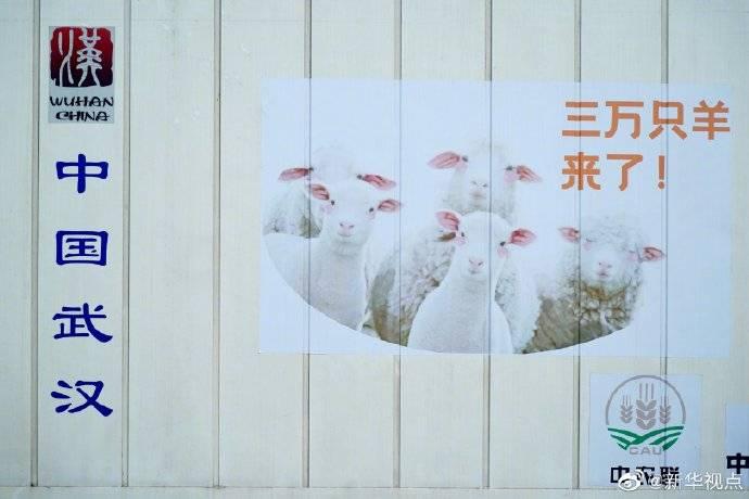 首批蒙古赠送羊抵达武汉 将分配给医务工作者