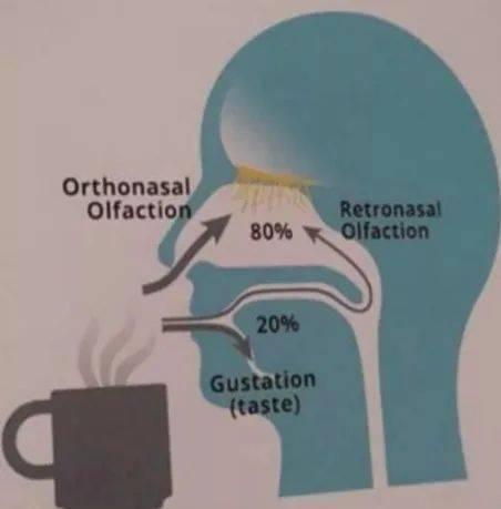 咖啡杯测中啜吸的意义 试用和测评 第4张