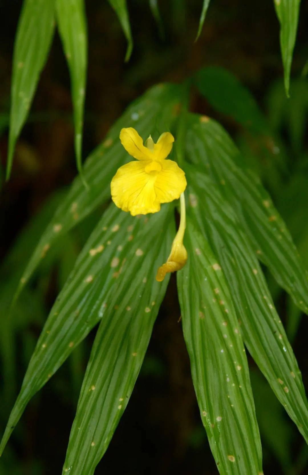 新知丨你不知道的鼎湖山植物故事