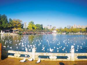 早晨7点 市民可入大观公园观鸥