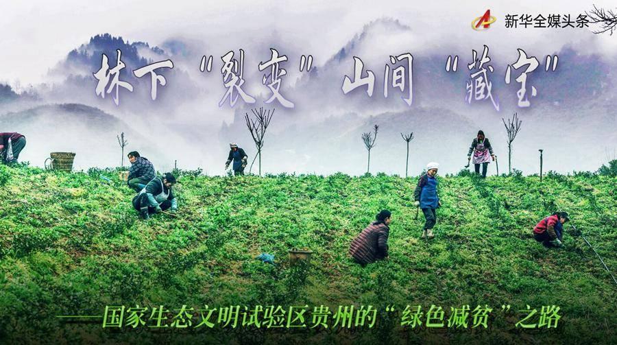 """林下""""裂变""""山间""""藏宝""""――国家生态文明试验区贵州的""""绿色减贫""""之路"""