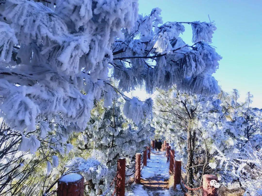 冬天,不妨来看看——大山包