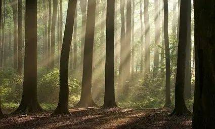 双胞胎被冻死在树林中,凶手竟是亲外公和爷爷,原因竟是……  第3张