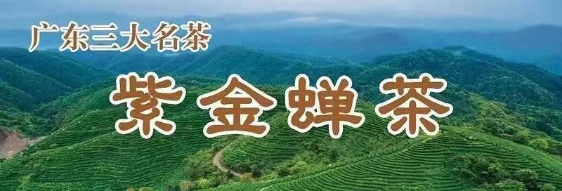 """2020年""""紫金蝉茶""""诗歌、书法、征文大赛启动啦!"""