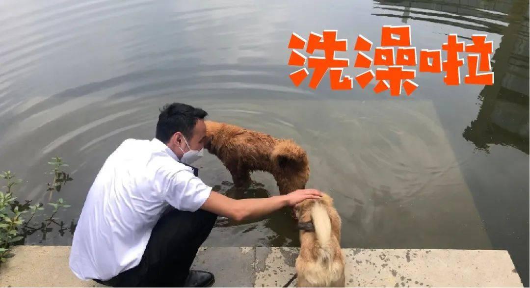 四只流浪狗入职阿里巴巴,网友:这下可不愁狗粮了!