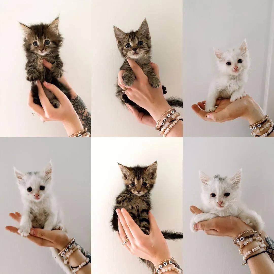 怀孕的流浪猫被收养后,竟然和女主人同时生娃