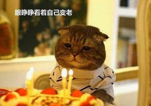 姐姐生日祝福语幽默(高级又沙雕的生日祝福)