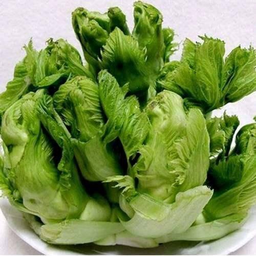 儿菜和榨菜的区别(罐儿菜是不是儿菜)插图(1)