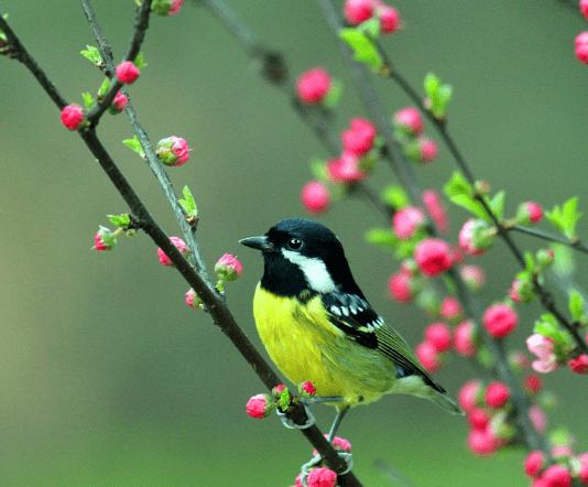 心理测试:4只小鸟,哪只是来报喜的?测你近期有没有贵人运?