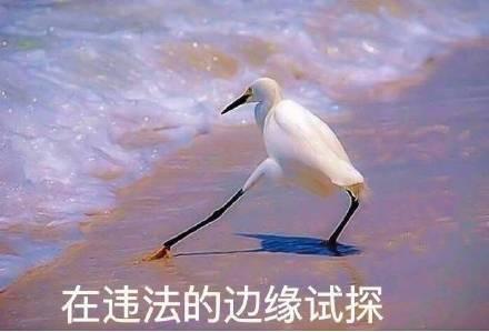 中央政法委評鄭爽代孕棄養風波:鉆法律空子,這絕不是無辜!