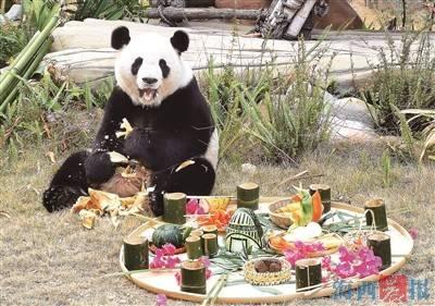 呆萌大熊猫乐享闽南尾牙宴 与广大游客欢乐过暖冬