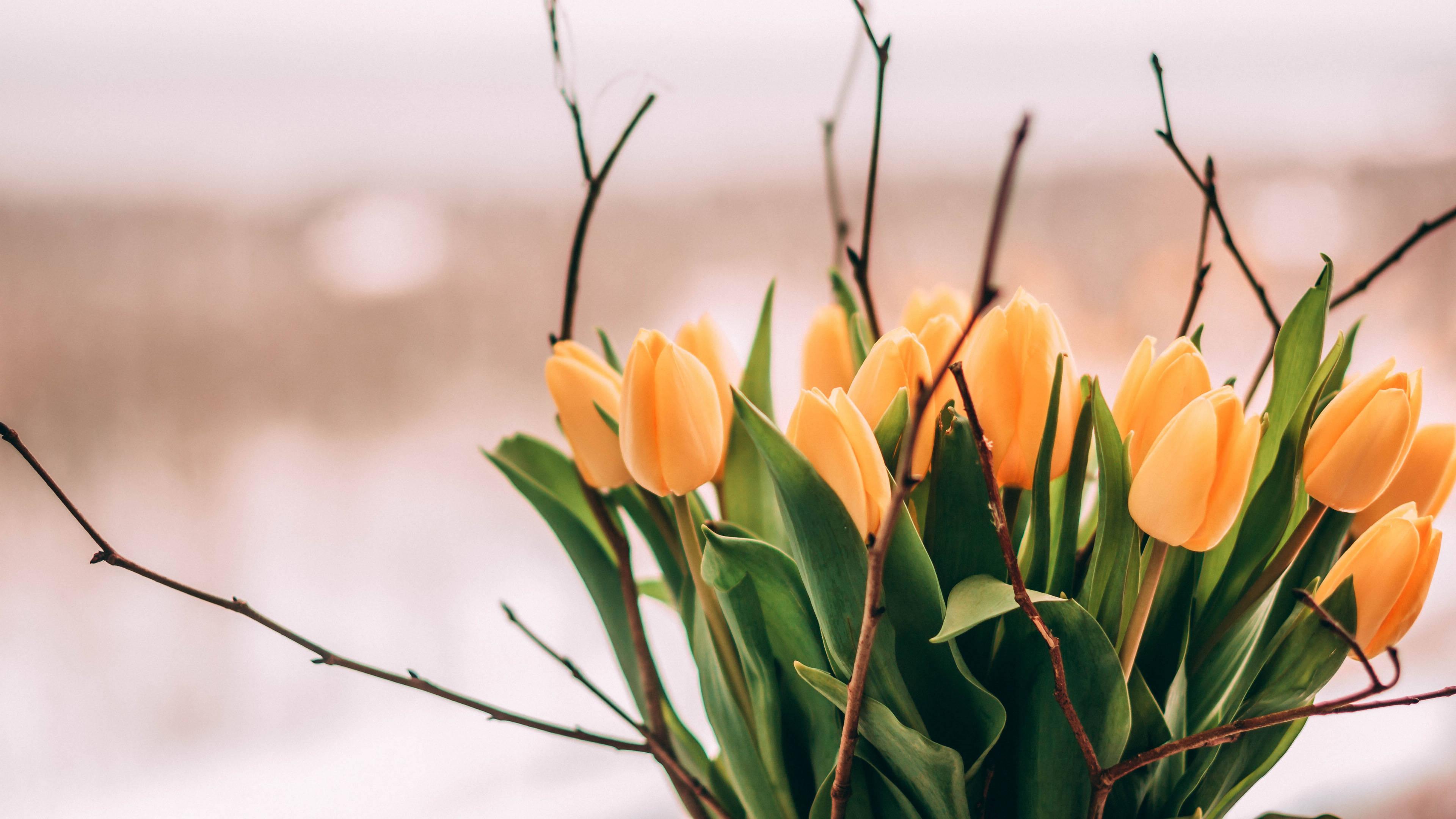 从2月23日开始,运势旺盛,会福星高照,鹏程似锦的三大生肖