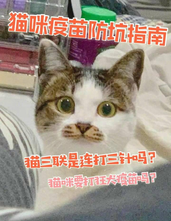 猫咪疫苗图片