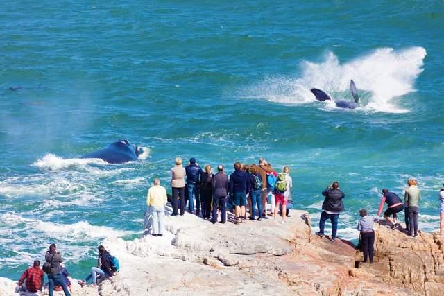 原鲸的隐私部分被藤壶寄生!真的无痛吗?会影响交配繁殖吗?
