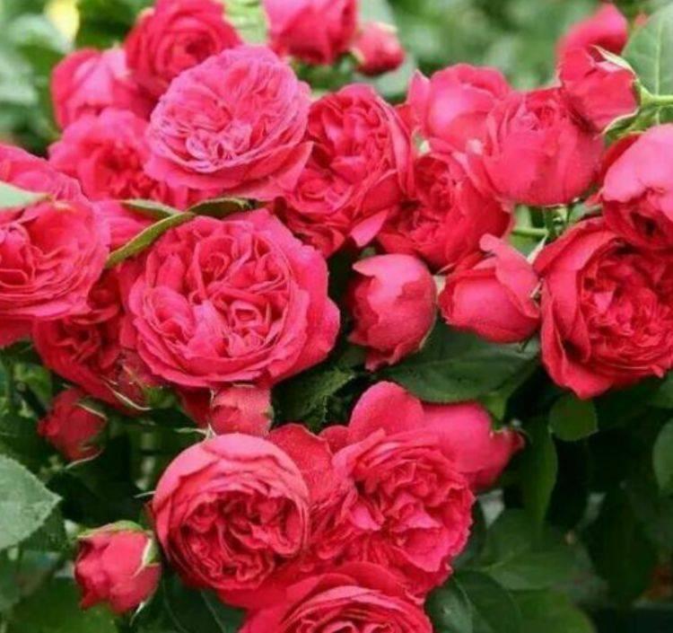 家里养上3种花,直接变成百花园,易爆盆,花开满盆,