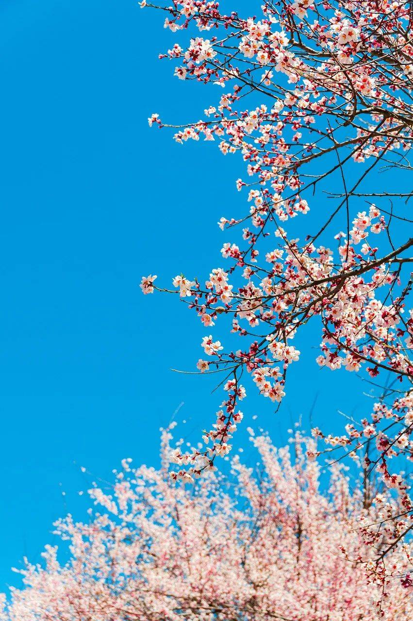 三月,与浪漫最贴近的地方,就是林芝
