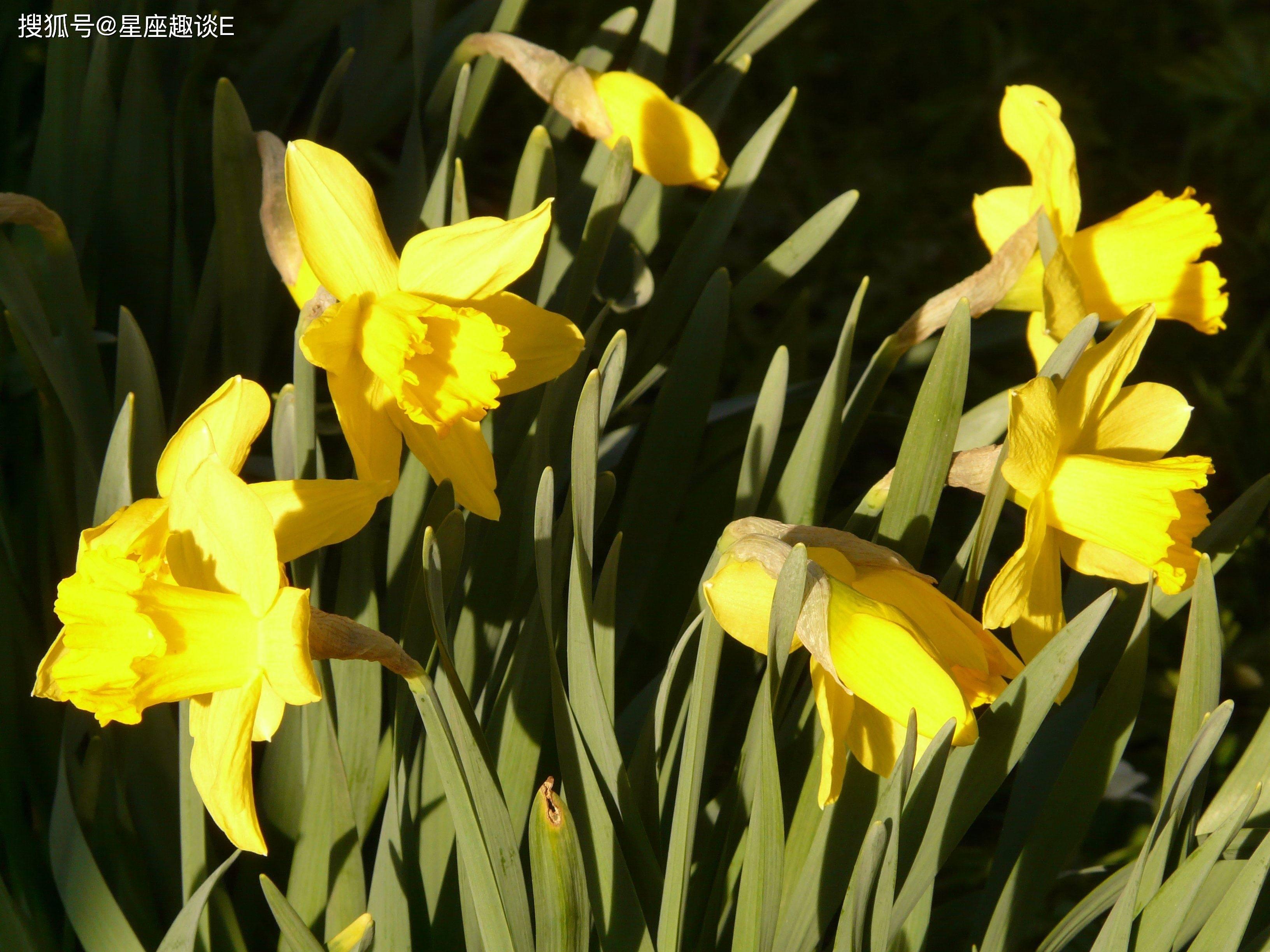 2月25日爱情运势:爱神眷顾,缘分升温的四大星座