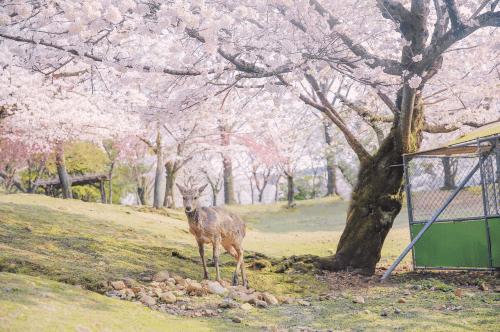 春天的生活有多美好?